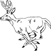 Deer Coloring Pages 1