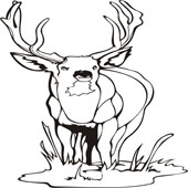 Deer Coloring Pages 3