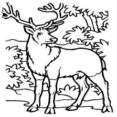 Deer Coloring Pages 4