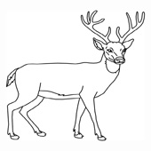 Deer Coloring Pages 5