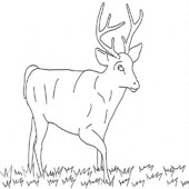 Deer Coloring Pages 7