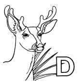 Deer Coloring Pages 8