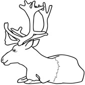 Deer Coloring Pages 9