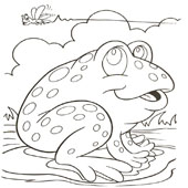 Frog Coloring Page 3