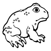 Frog Coloring Page 7