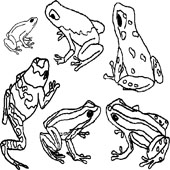 Frog Coloring Page 10