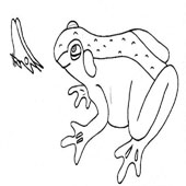 Frog Coloring Page 12