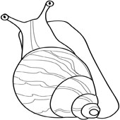 Snail Coloring 8