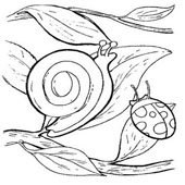 Snail Coloring 12