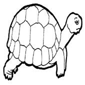 Turtle Coloring Pages 4