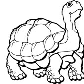 Turtle Coloring Pages 6