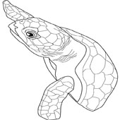 Turtle Coloring Pages 7